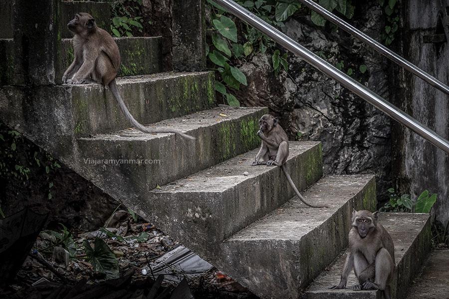monos cuevas hpa-an